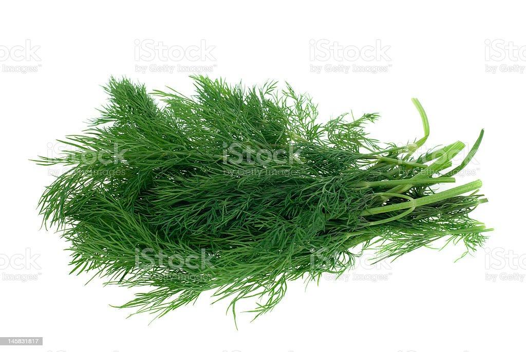 fresh dill herb royalty-free stock photo