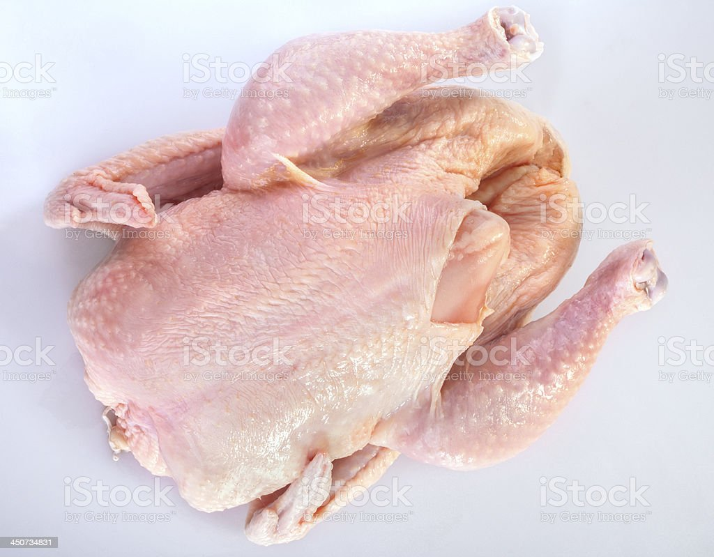 fresh domestic chicken stock photo