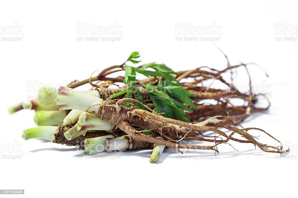Fresh Dong Quai or female ginseng root, Chinese herbal medicine. stock photo