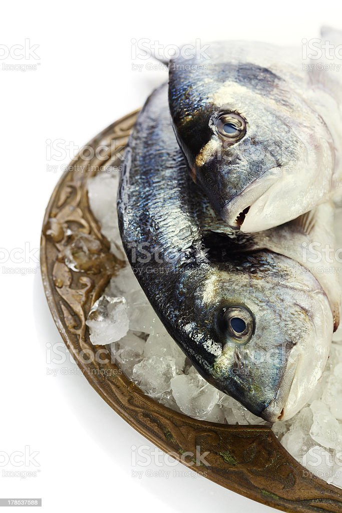 fresh dorada fish on ice royalty-free stock photo