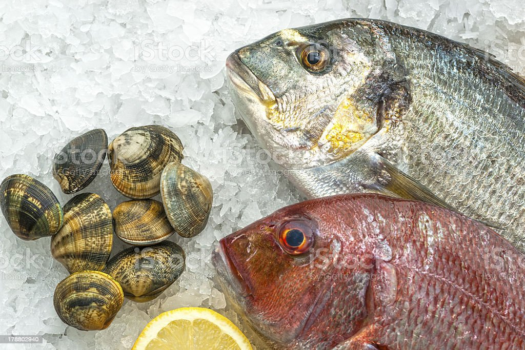 Fresh Dorade and Red Snapper on Ice royalty-free stock photo