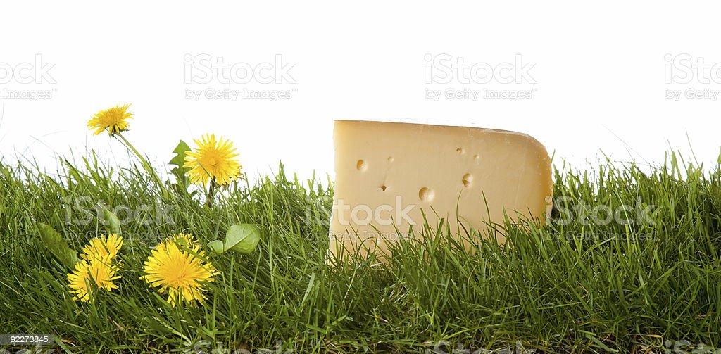 fresh dutch cheese royalty-free stock photo