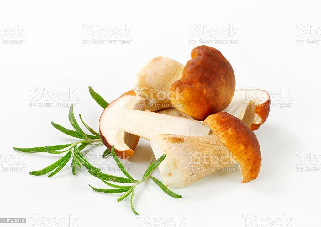 Fresh edible mushroom stock photo