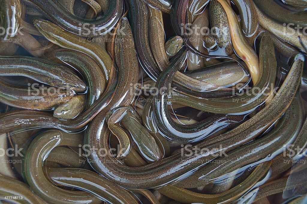 Fresh eels in Vietnamese market. stock photo