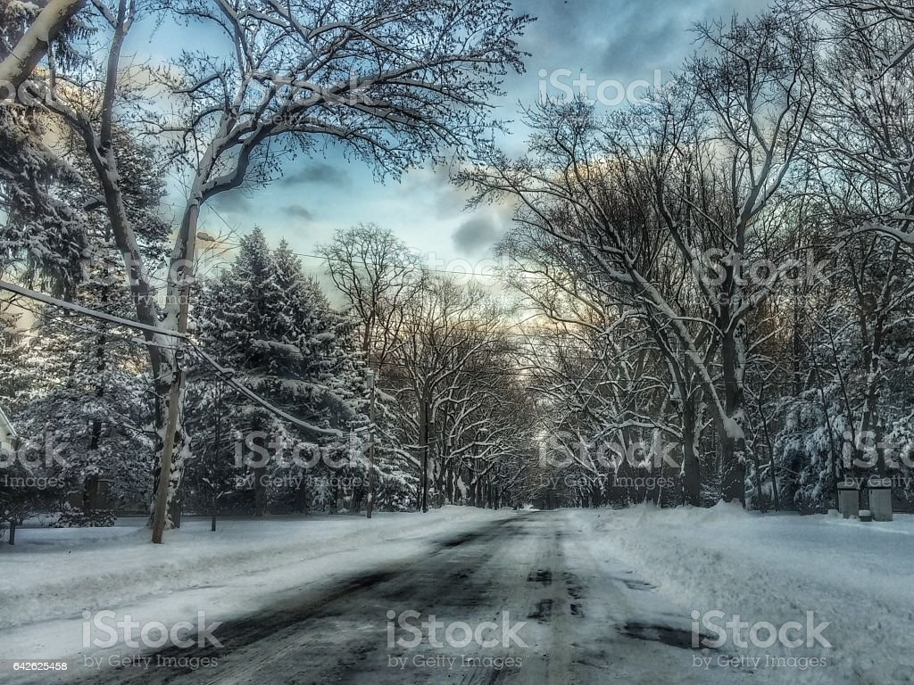 Fresh Fallen Snow Covered Tree Lined Winter Street Scene, Nature stock photo