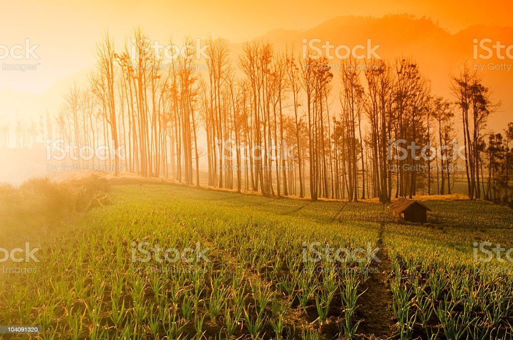 Fresh Farmland Sunrise royalty-free stock photo