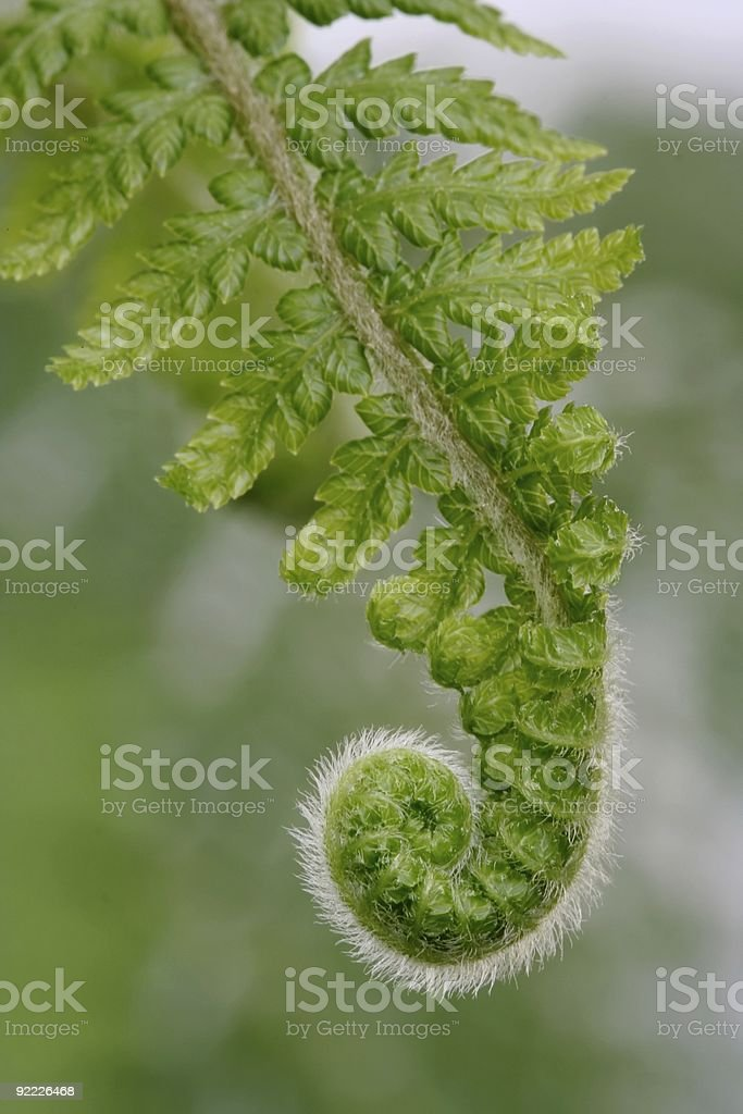 Fresh Fern Frond stock photo