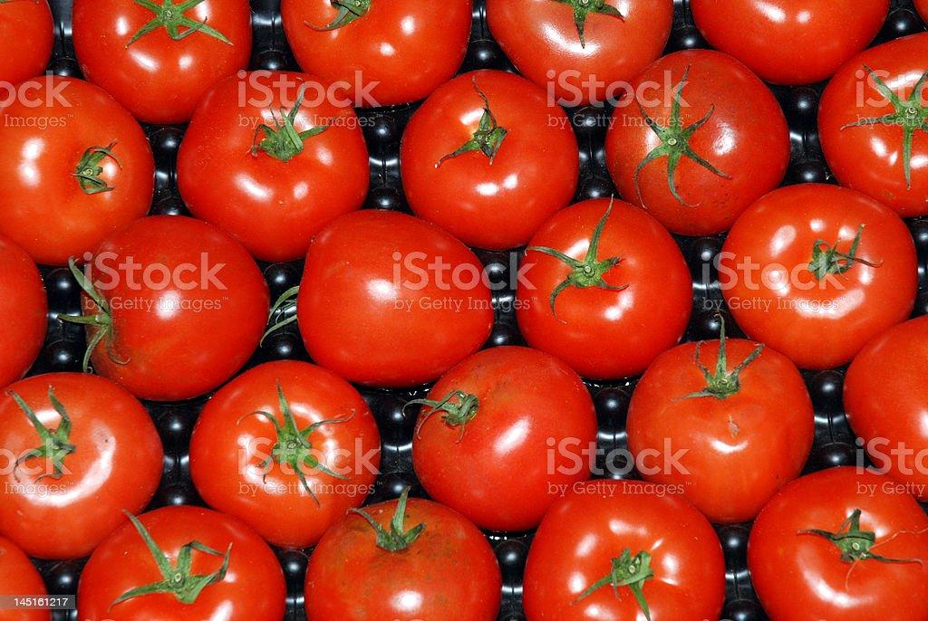 Fresh field tomatoes royalty-free stock photo