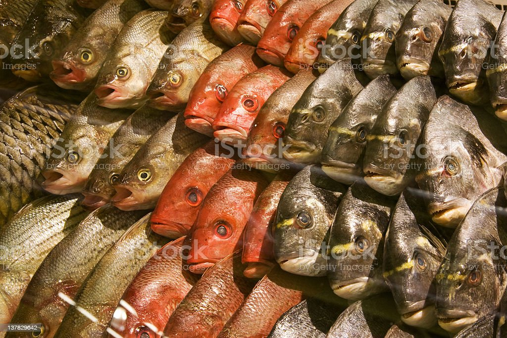 fresh fish at a market royalty-free stock photo