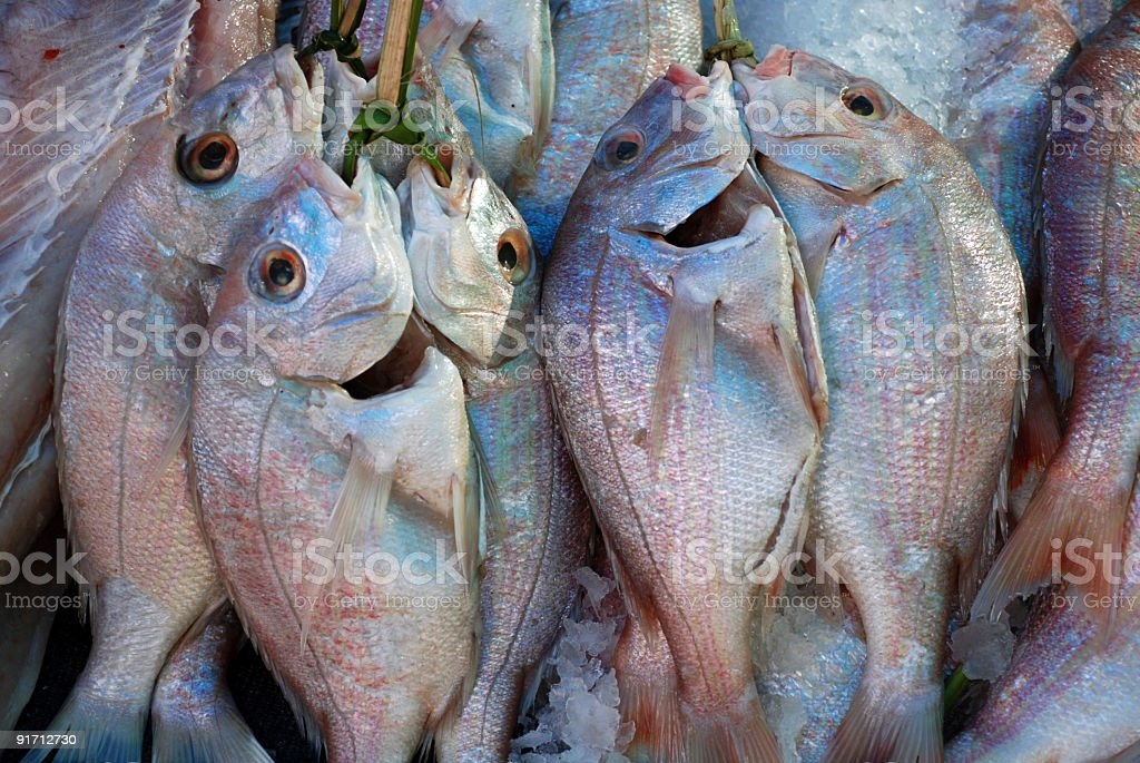 Fresh Fish at the Jetty royalty-free stock photo