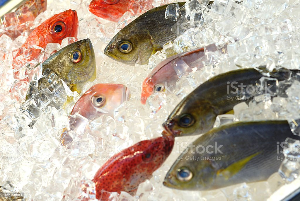 Fresh Fish at the market, displayed on ice stock photo