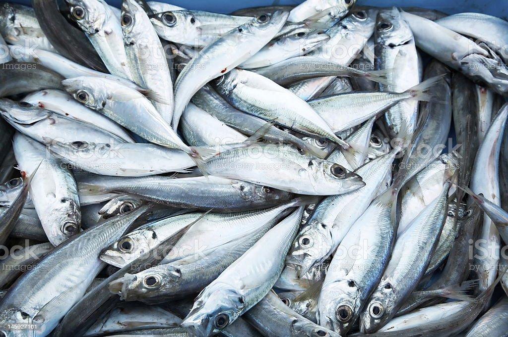 fresh fish at the market stock photo