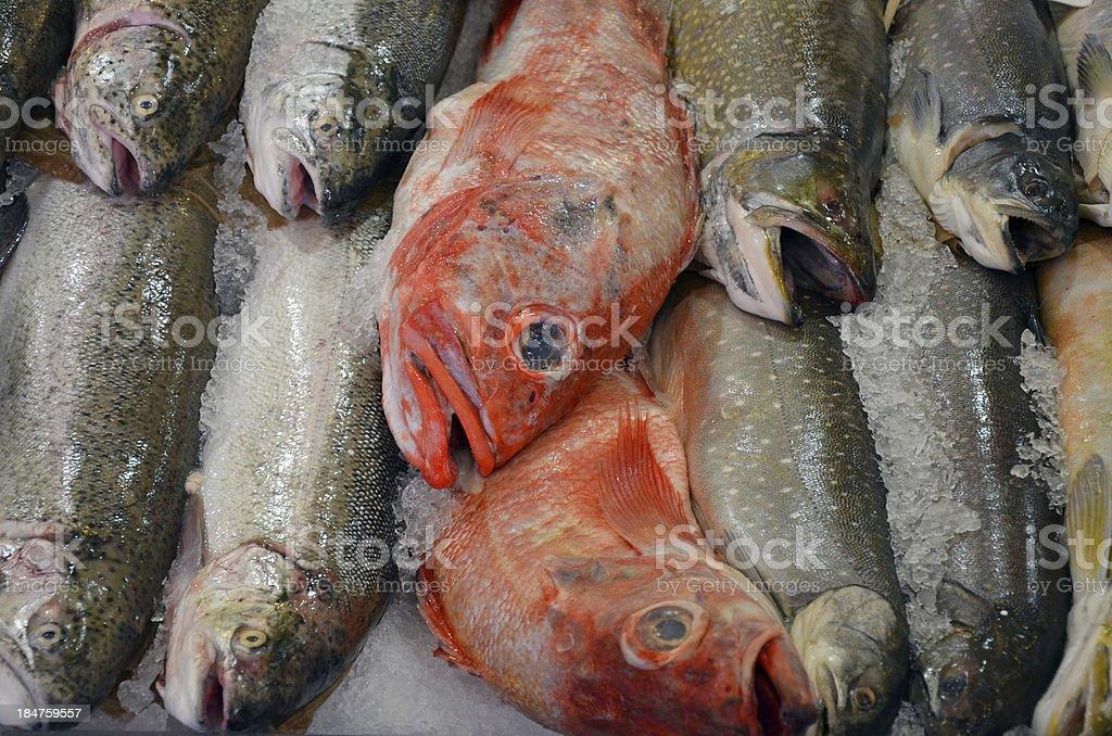 Fresh fish at the market royalty-free stock photo