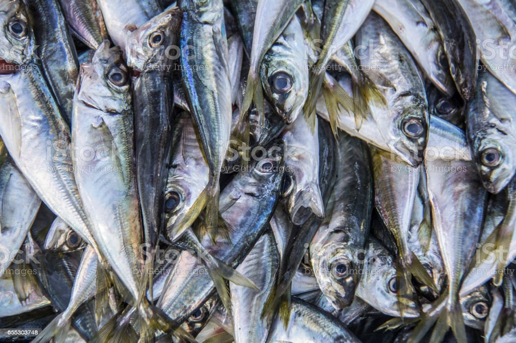 Fresh fish (anchovies) at the market stock photo
