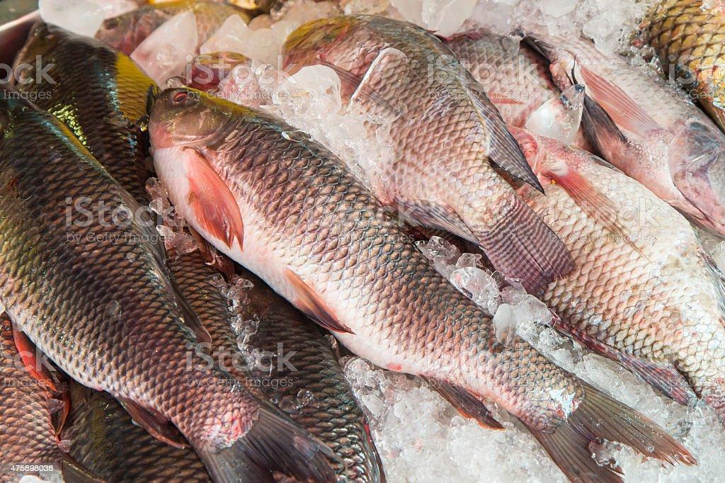 Fresh fish at the market,Thailand royalty-free stock photo