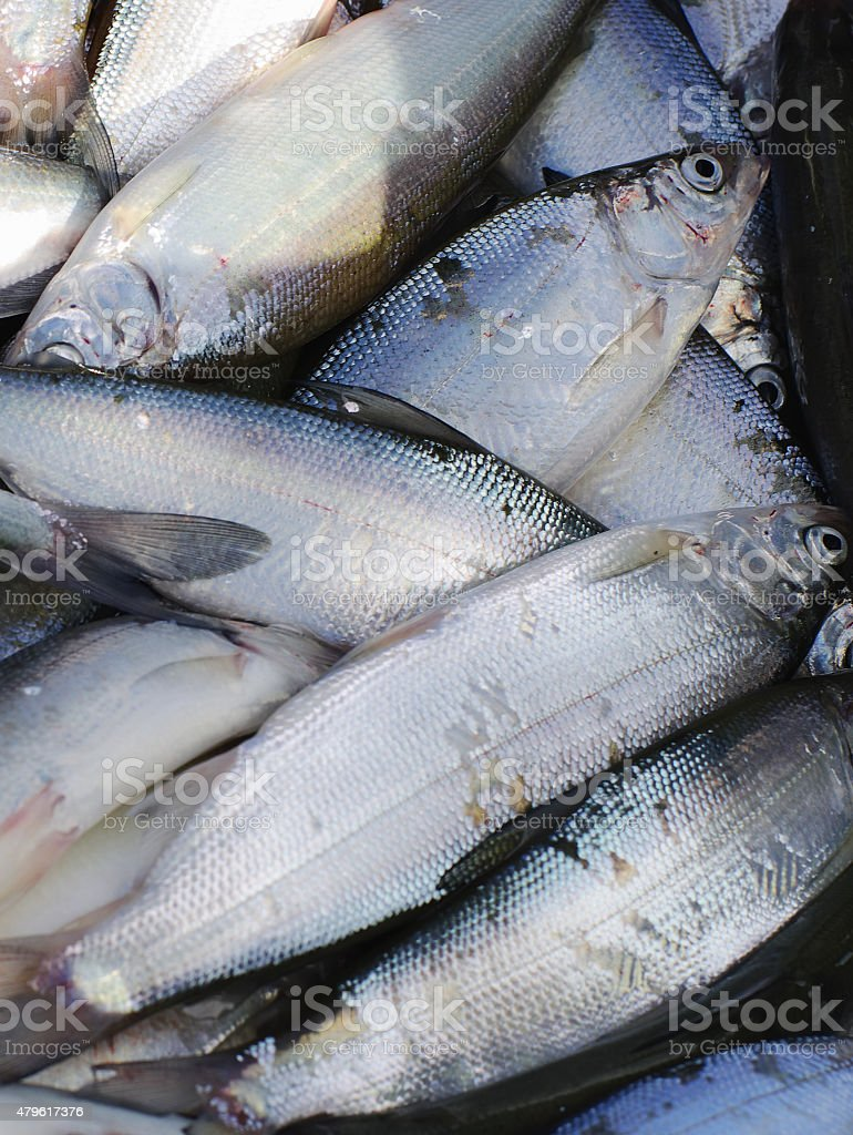 Fresh fish background stock photo
