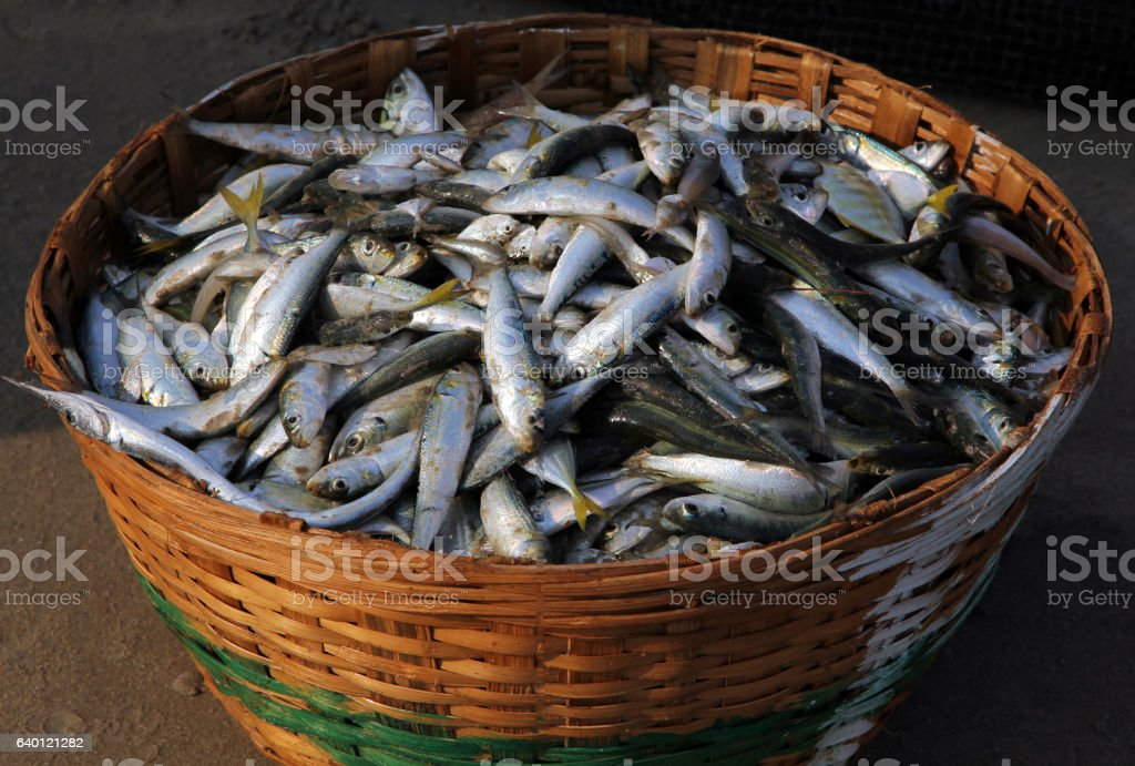 Fresh fish catch in a wicker basket on the coast stock photo