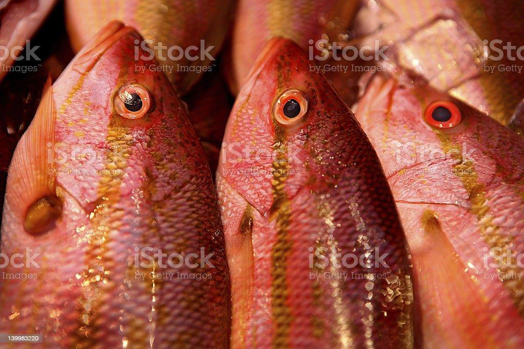 Fresh Fish closeup at market royalty-free stock photo
