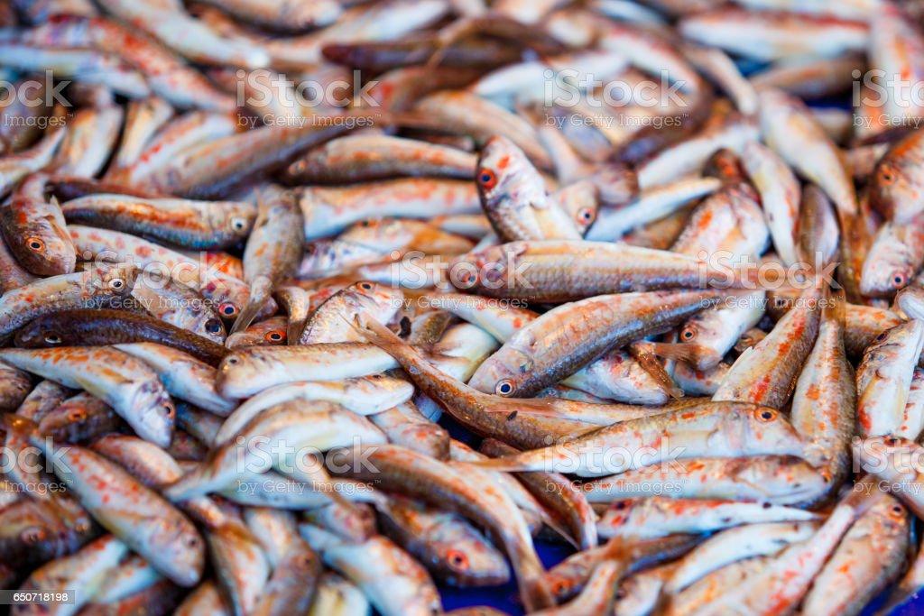 Fresh fish for sale on fish market. Red mullets. Mullus barbatus stock photo