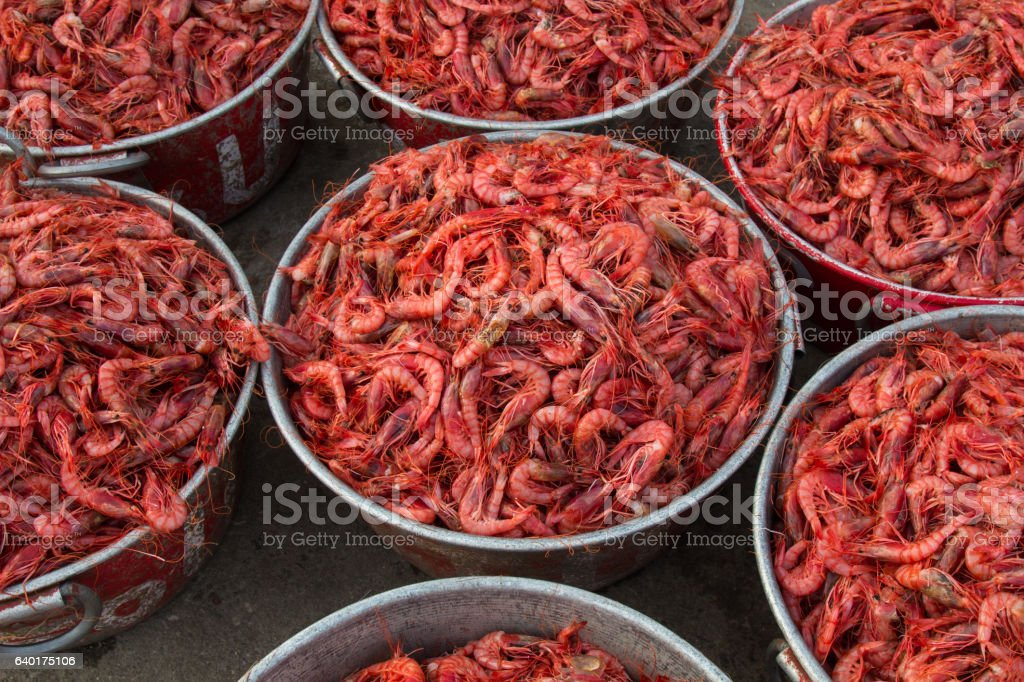 Fresh fish, giant prawn for sale stock photo