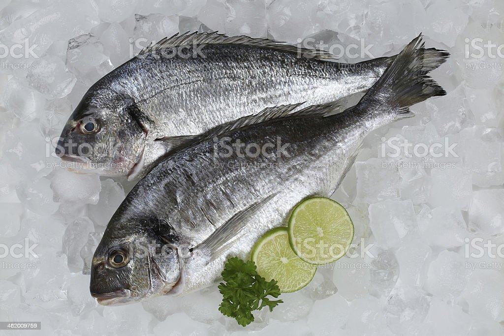 Fresh fish giltheads on ice stock photo