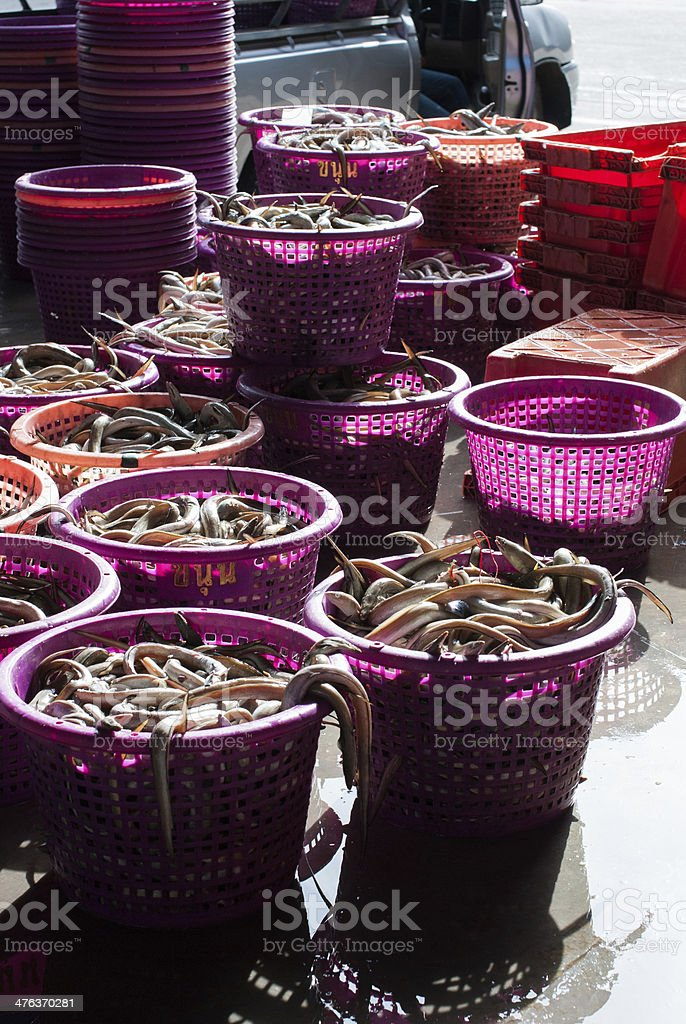 fresh fish in a basket royalty-free stock photo