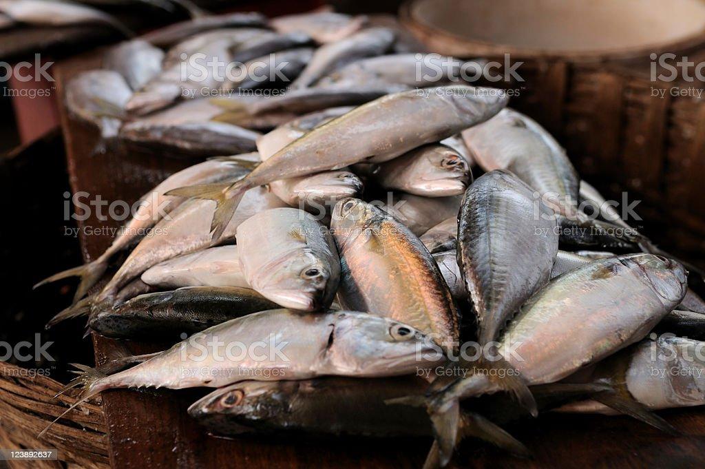 Fresh fish in market, Mapusa Goa royalty-free stock photo