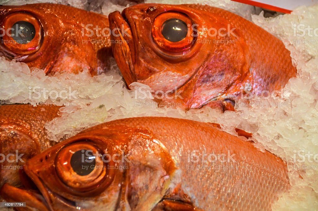 Fresh fish in market stock photo