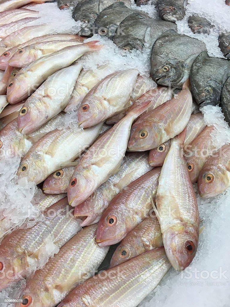 Fresh fish in the market stock photo