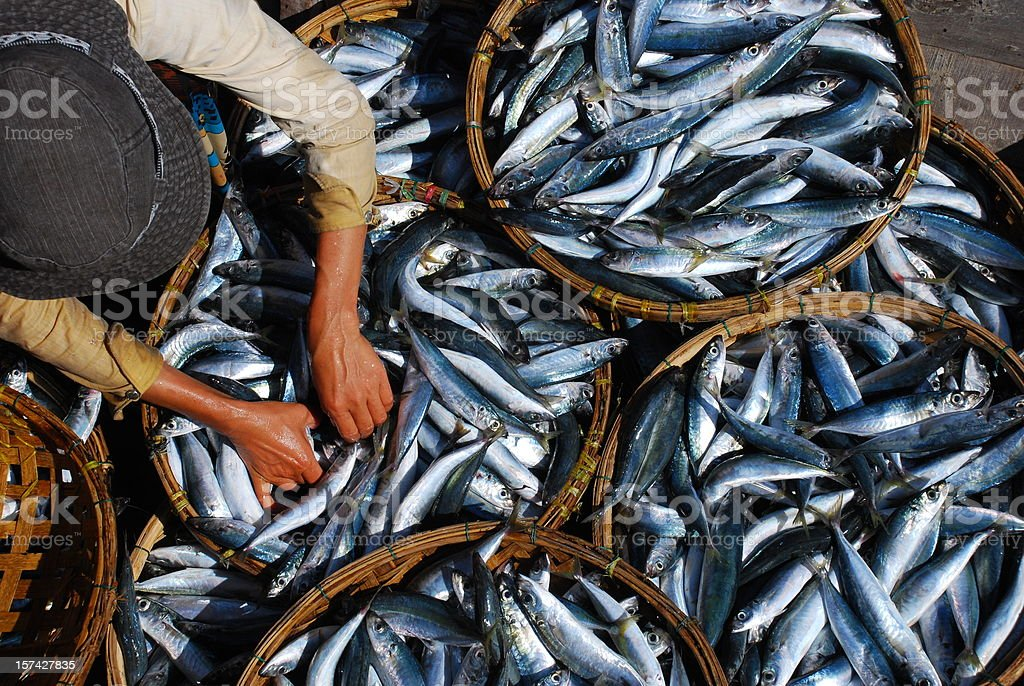 Fresh fish is sorted at market in Hoi An, Vietnam stock photo
