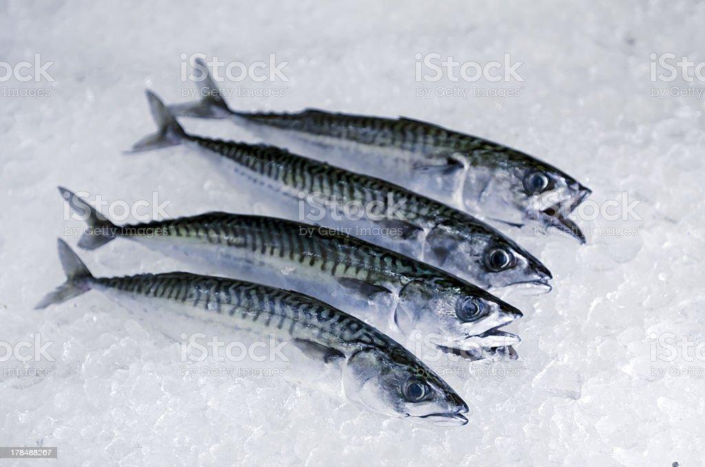 Fresh fish, Mackerel, on ice stock photo