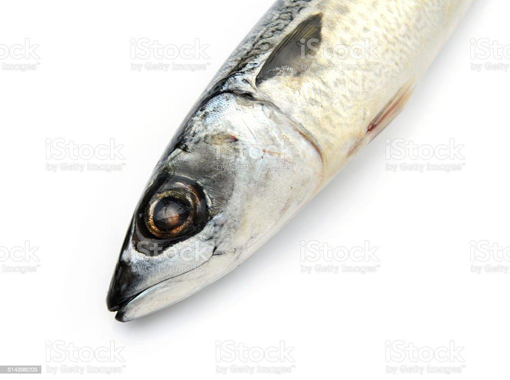 Fresh fish Mackerel, tuna, saba stock photo