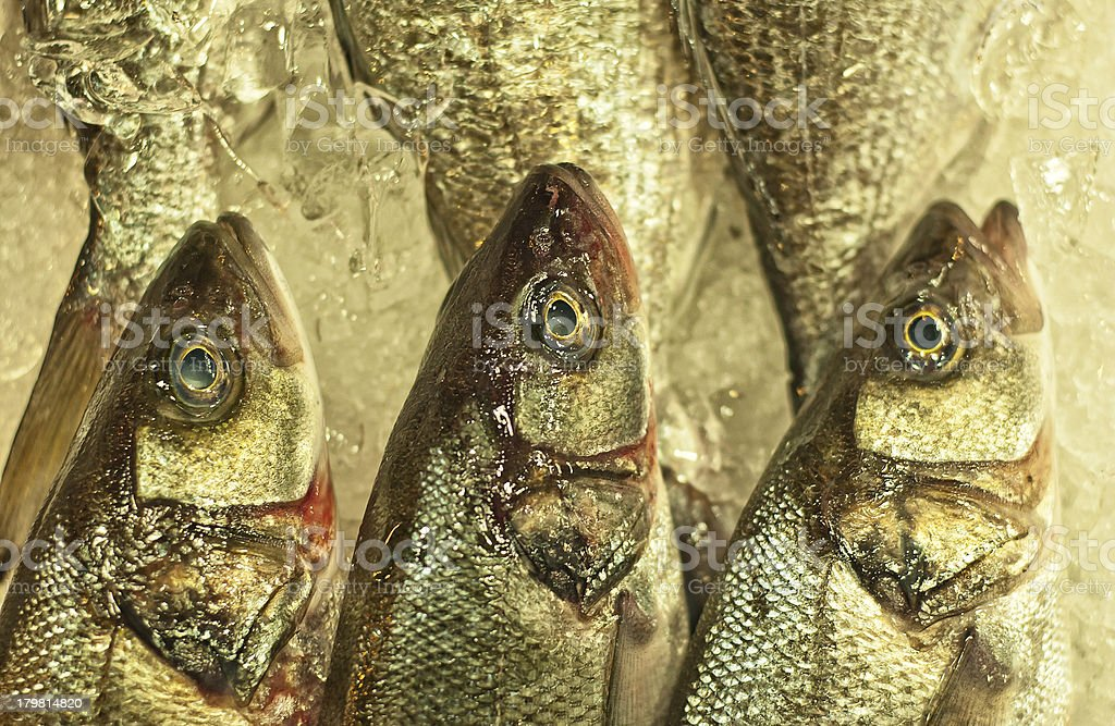 Fresh Fish on Ice royalty-free stock photo