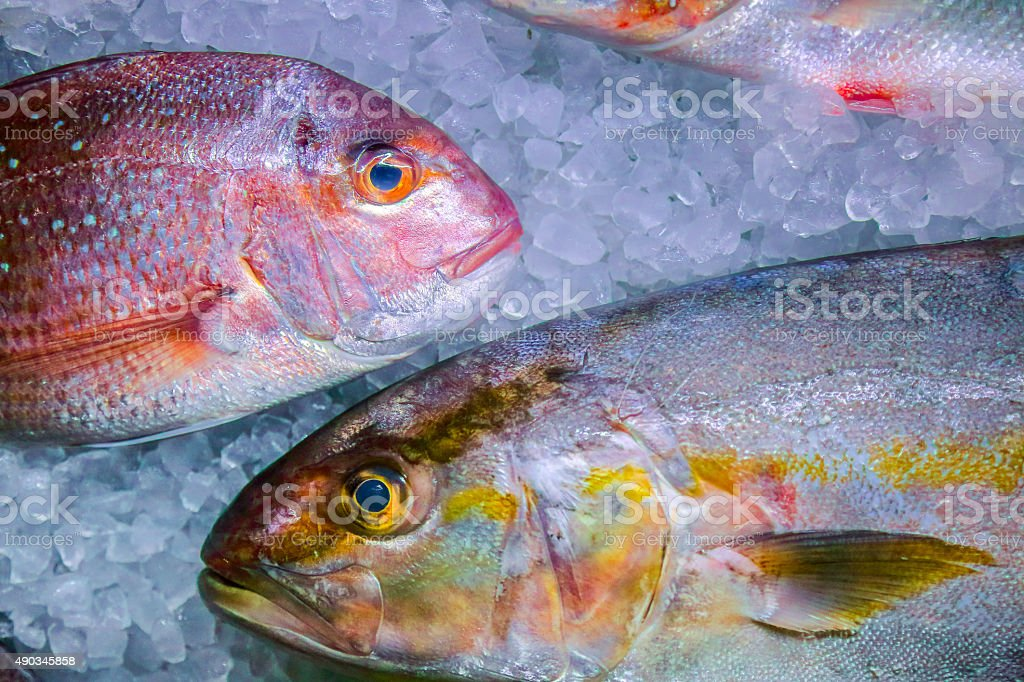 Fresh fish on ice stock photo