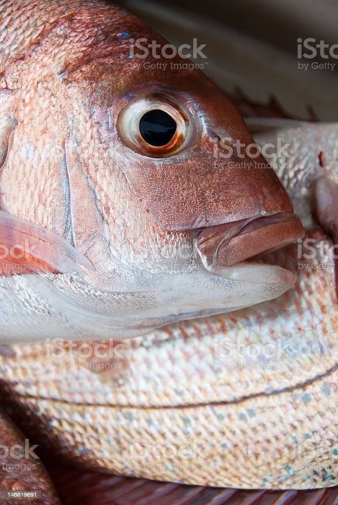 Pescado fresco foto de stock libre de derechos