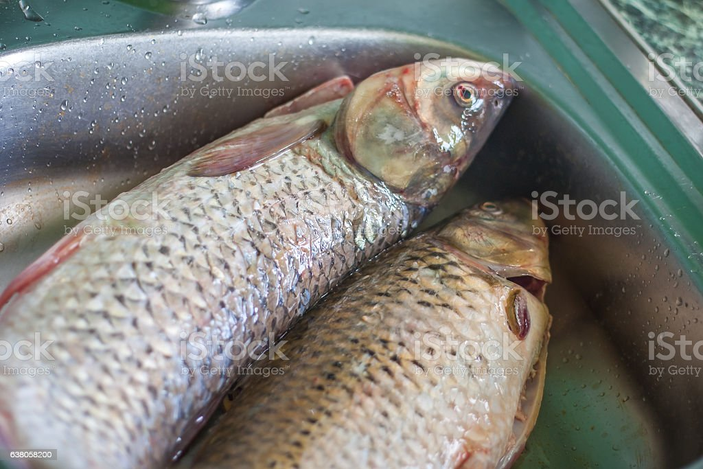 fresh fish ready to cook, washing fish stock photo