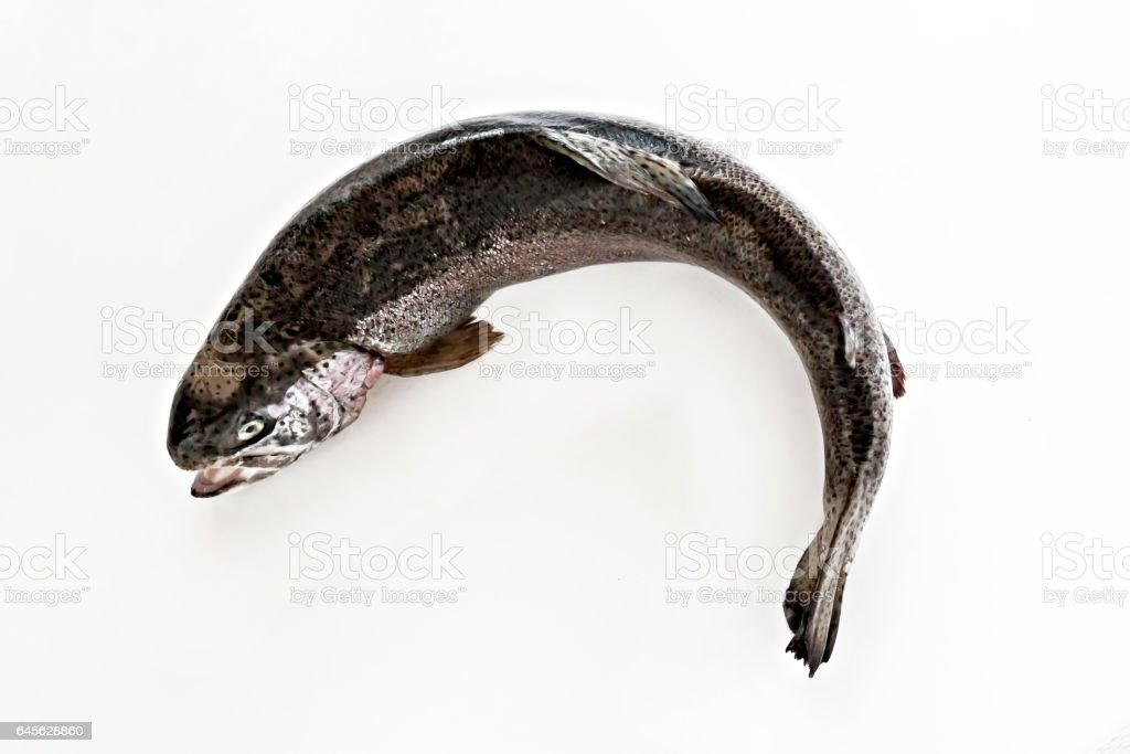 fresh fish salmon sea trout on a white background isolated stock photo