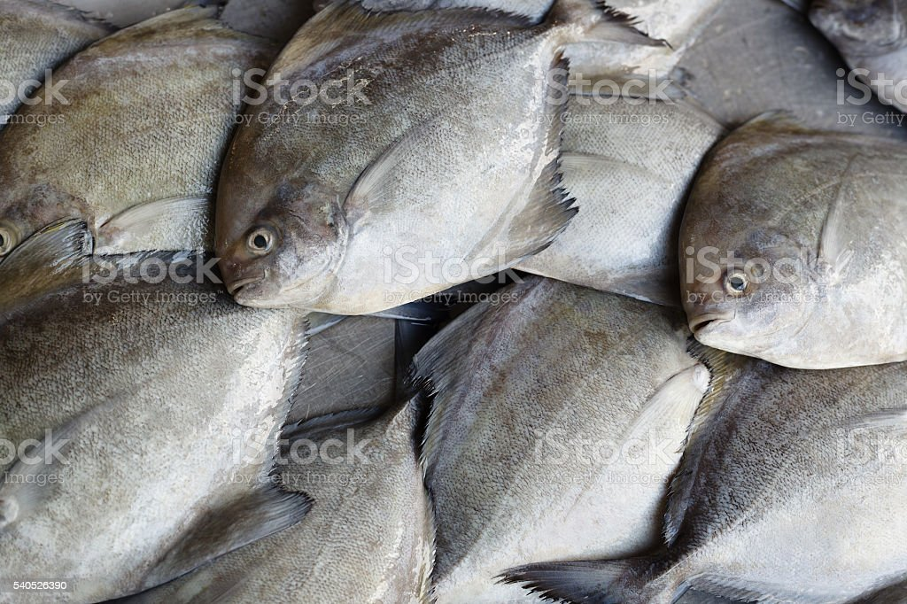 Fresh fish. Seafood in market. Background. stock photo