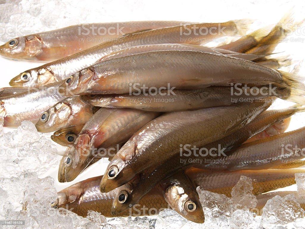 fresh fish -- smelt royalty-free stock photo