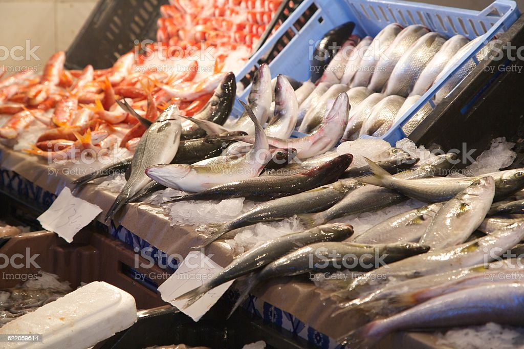 Fresh fished sea bass stock photo