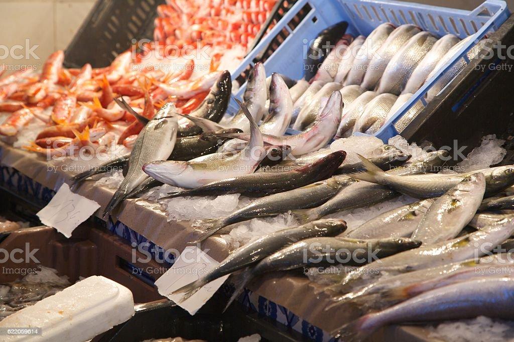 Fresh fished sea bass stock photo