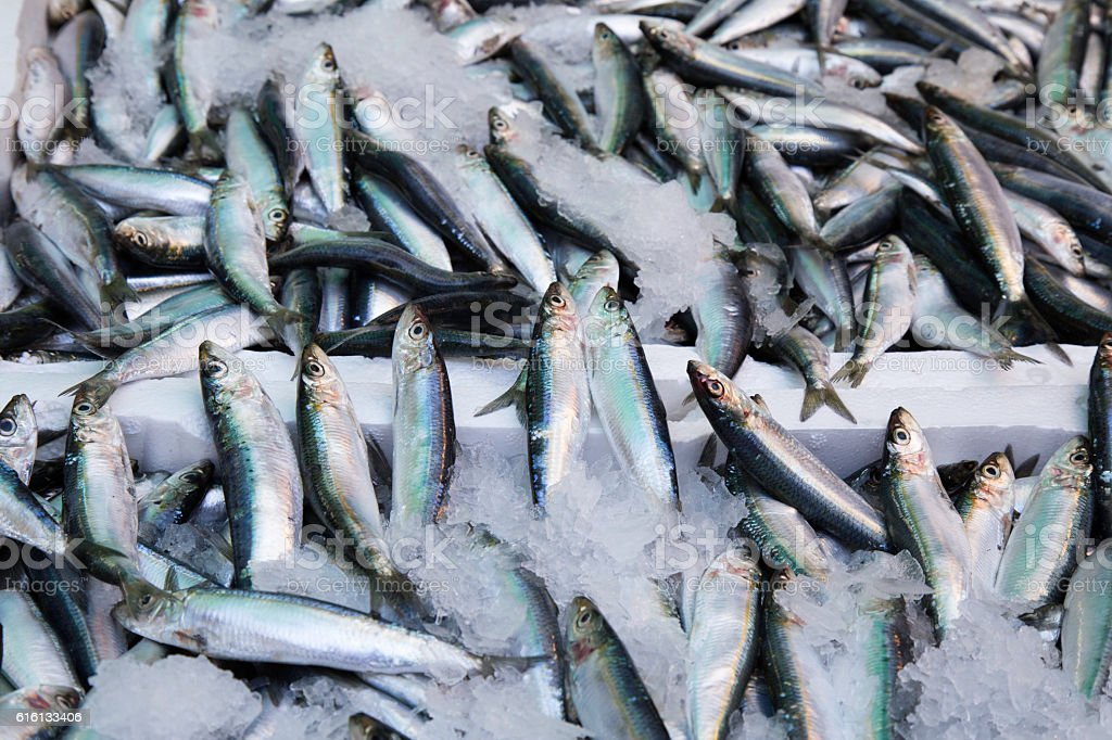 Fresh fishes (anchovies, hamsi) at the market stock photo