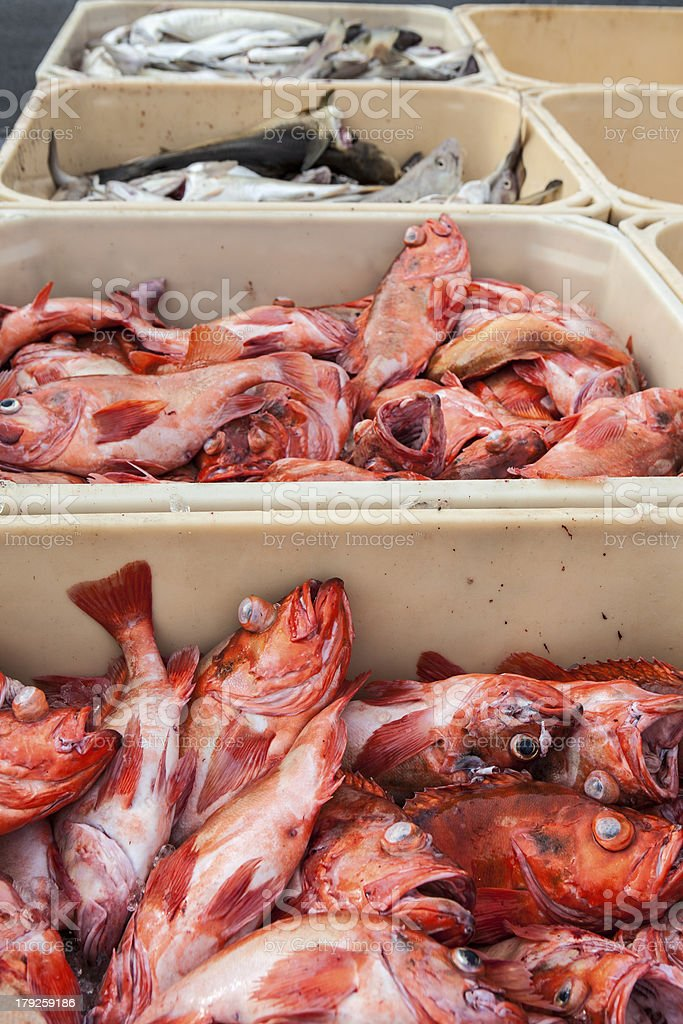 fresh fishes at the port royalty-free stock photo