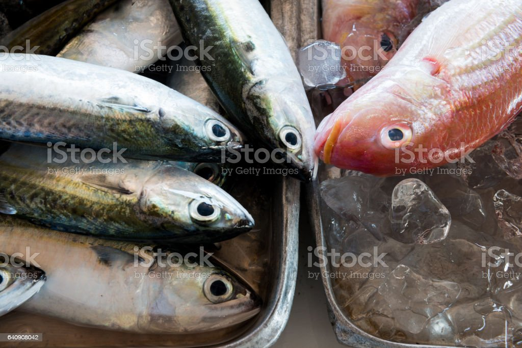 Fresh fishes in a market local market stock photo
