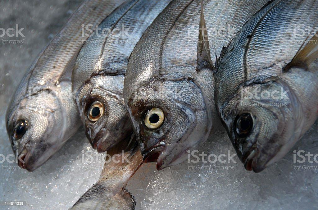 fresh fishes on ice royalty-free stock photo