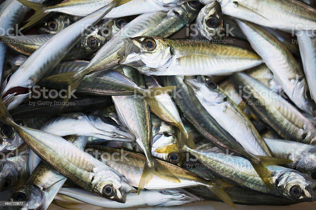 Fresh Fishes stock photo