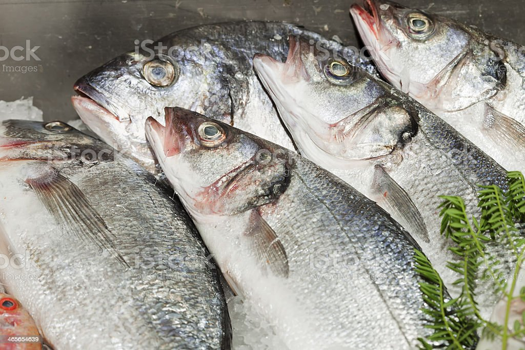 Fresh Fishes royalty-free stock photo