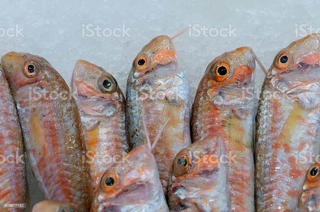 Fresh fishes Red mullets Mullus barbatus stock photo