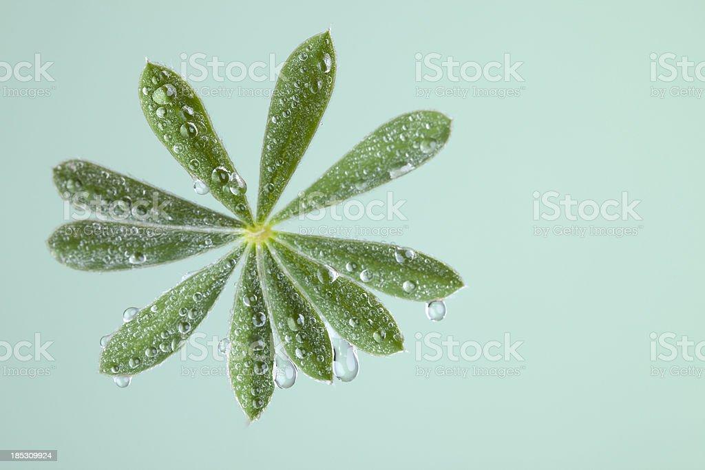 Fresh flower leafs. royalty-free stock photo