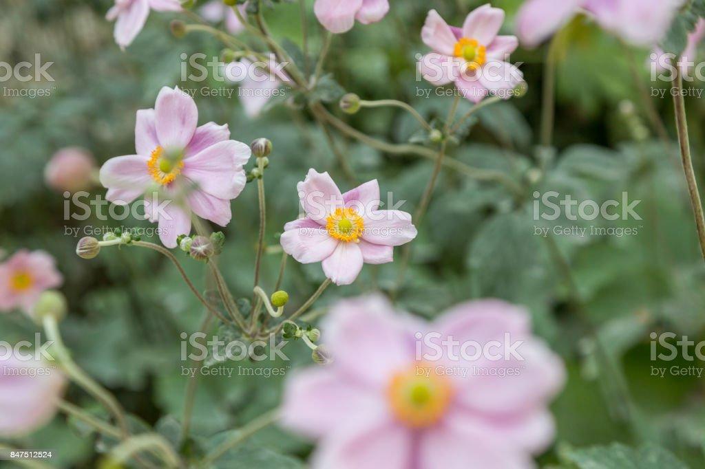 fresh flower on plant in garden in sunny day stock photo